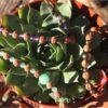Bracelets pierres et graines sacrées
